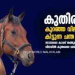 Horse Low price tamilnadu anthiyur