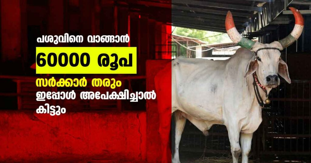 Dairy Farm subsidy in kerala - Check Eligibility & Apply Online