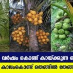 Best Coconut Plants in the Market