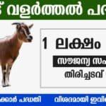 Thozhil urappu scheme in Kerala