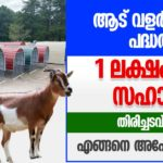 Commercial goatery unit in Kerala